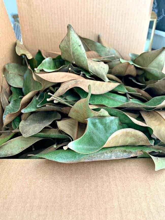 a box of dried magnolia leaves