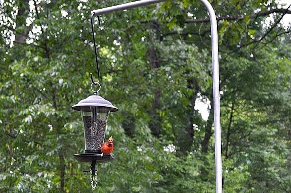 DIY Bird Feeder Pole for Under $5