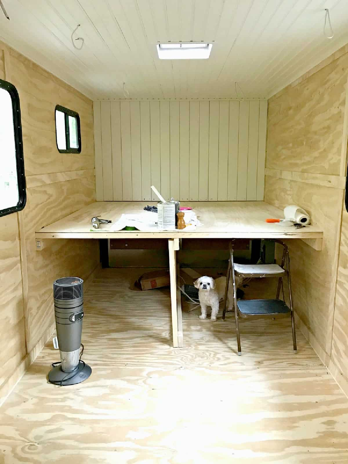 A dog standing in a cargo trailer conversion