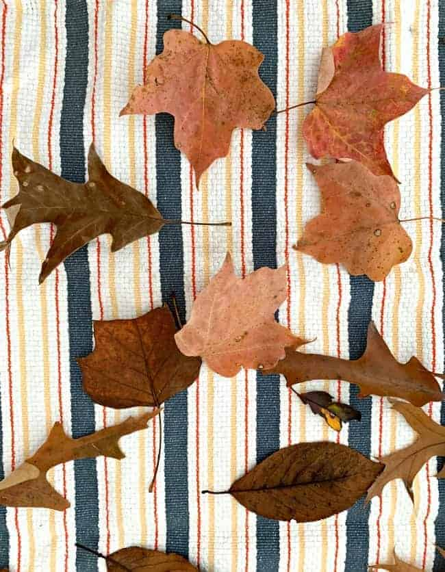fresh fall leaves on a striped kitchen towel