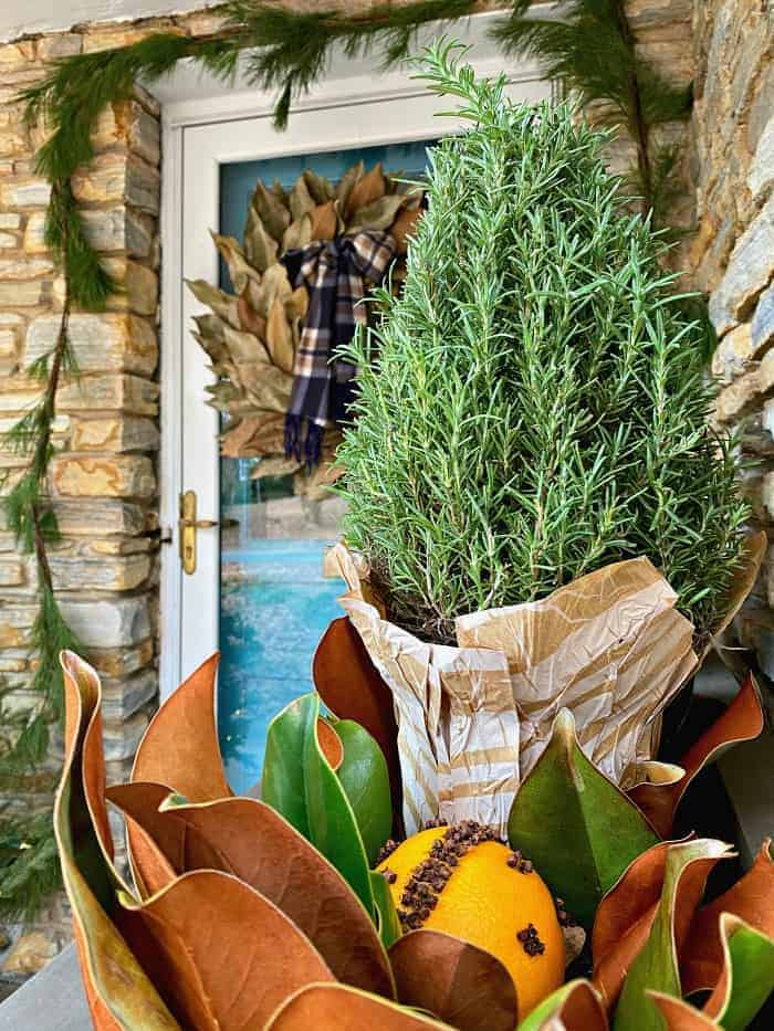orange pomander and rosemary bush in planter with front door in the background