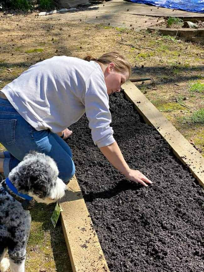 woman planting seeds in a raised planter bed with dog looking on