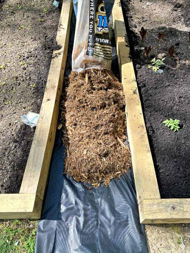 laying cypress mulch between two raised garden beds
