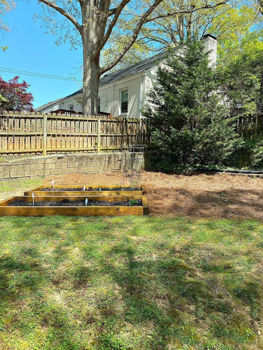 diy raised garden beds in yard with pine straw around them