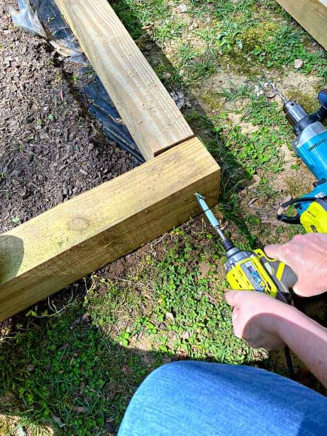 drilling screws into wood planks of raised planter bed