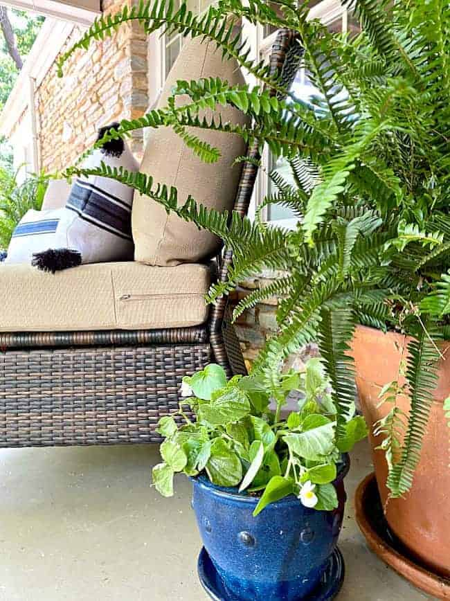potted plants on a front porch decorated for summer