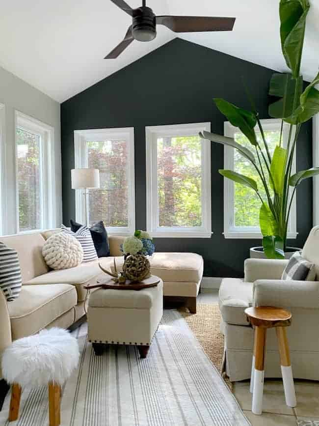 dark gray painted accent wall in a small sunroom with a large green plant in the corner