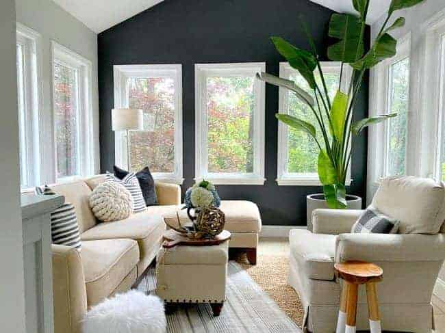 dark gray accent wall in a small sunroom with a big green plant in the corner