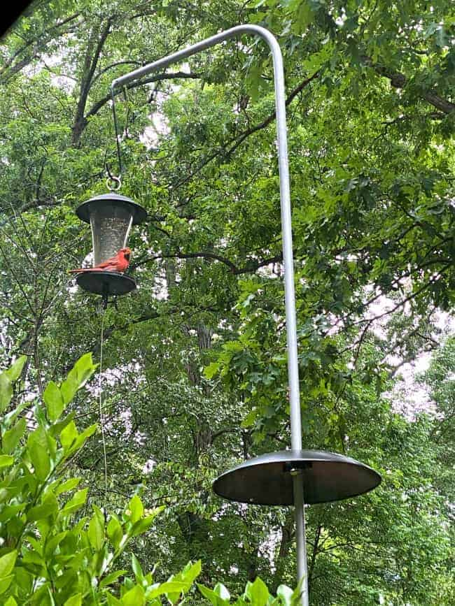 red cardinal on bird feeder and pole