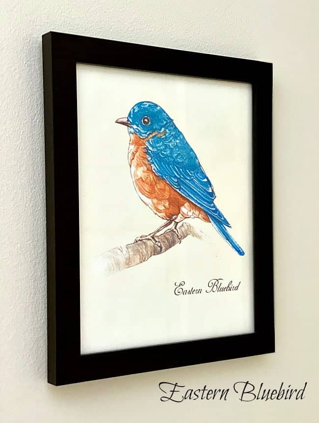 Easter Bluebird printable