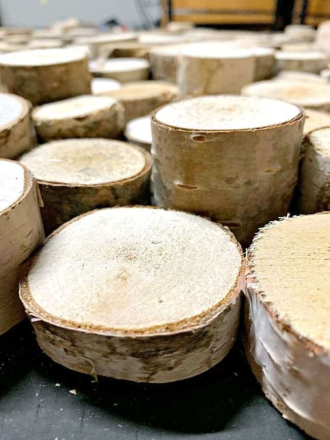 top view of birch log slices