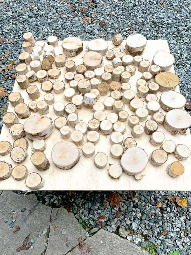 different sizes of birch log slices on plywood