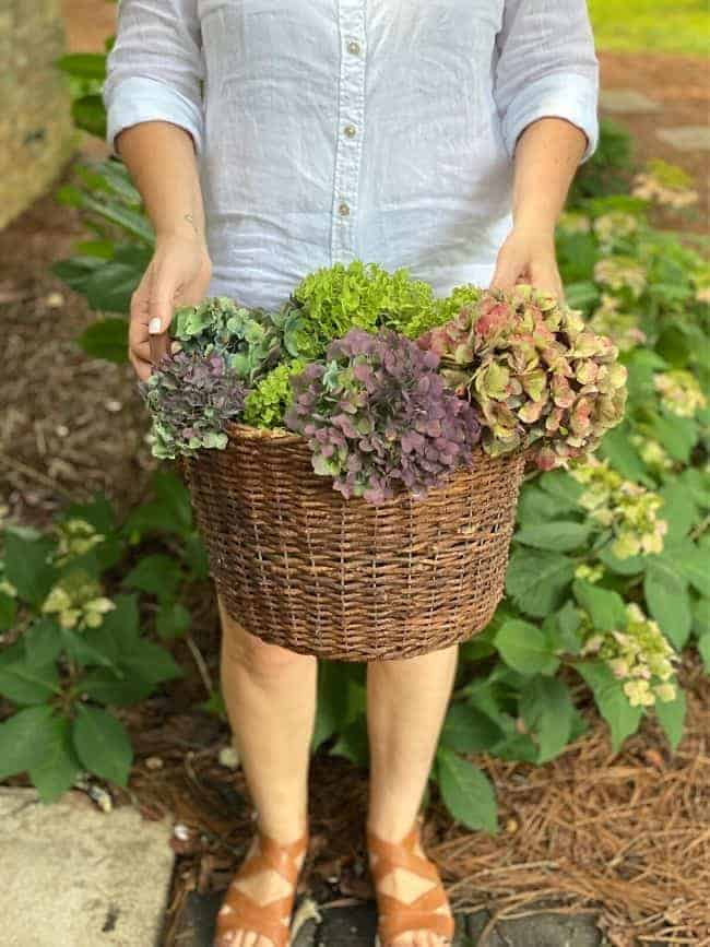 woman holding basket of picked hydrangeas