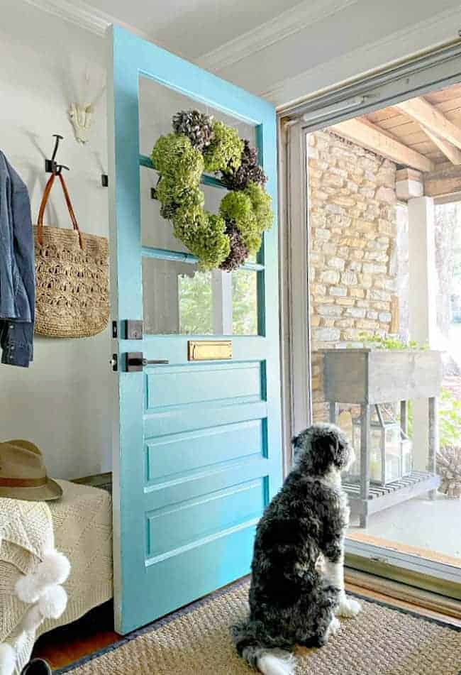 dried hydrangea wreath hanging on a turquoise door and dog sitting and looking out door