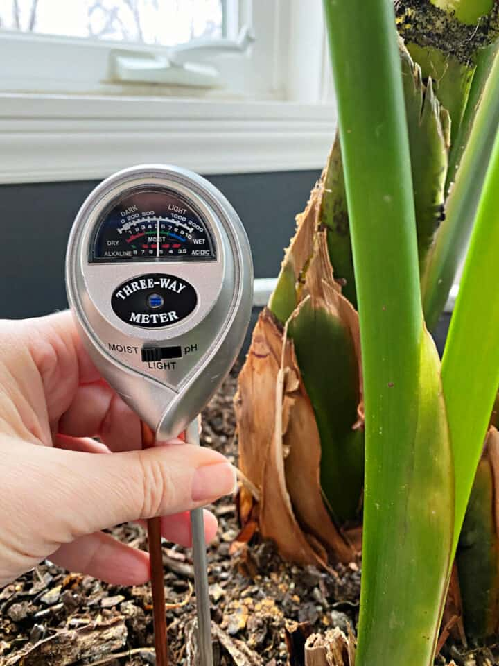 water meter in soil of plant