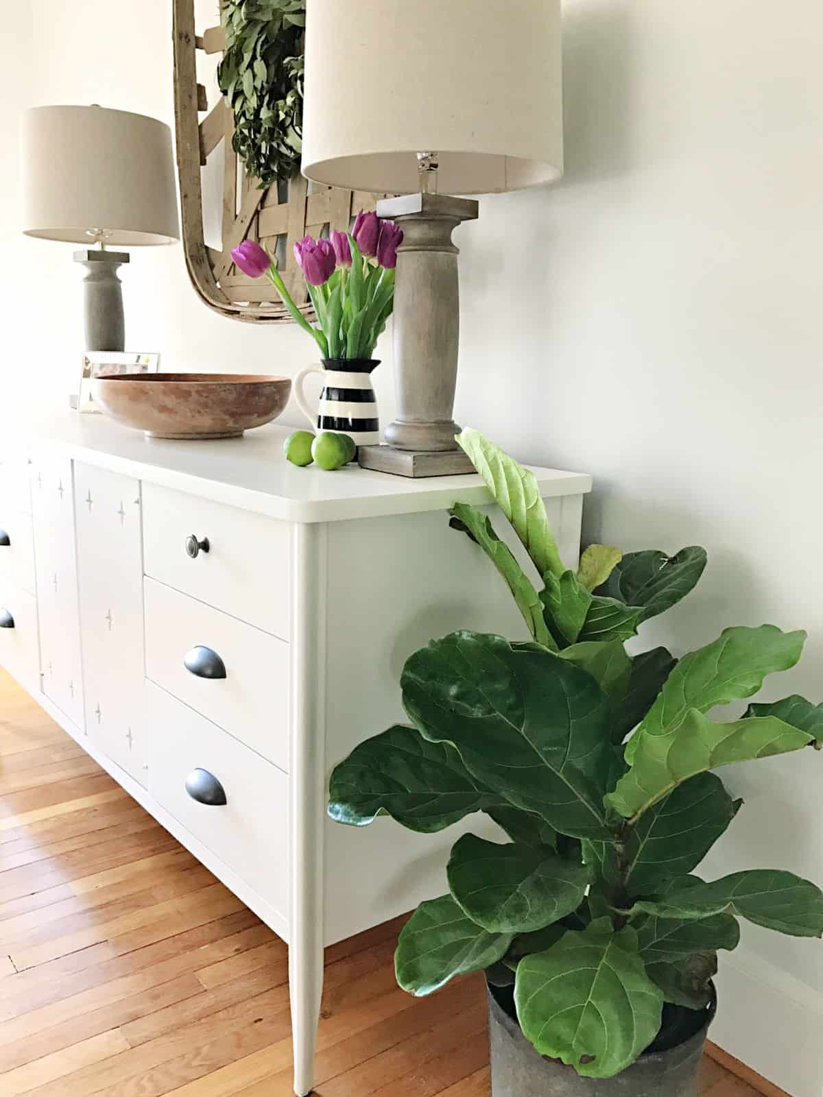 small fiddle leaf fig plant in dining room