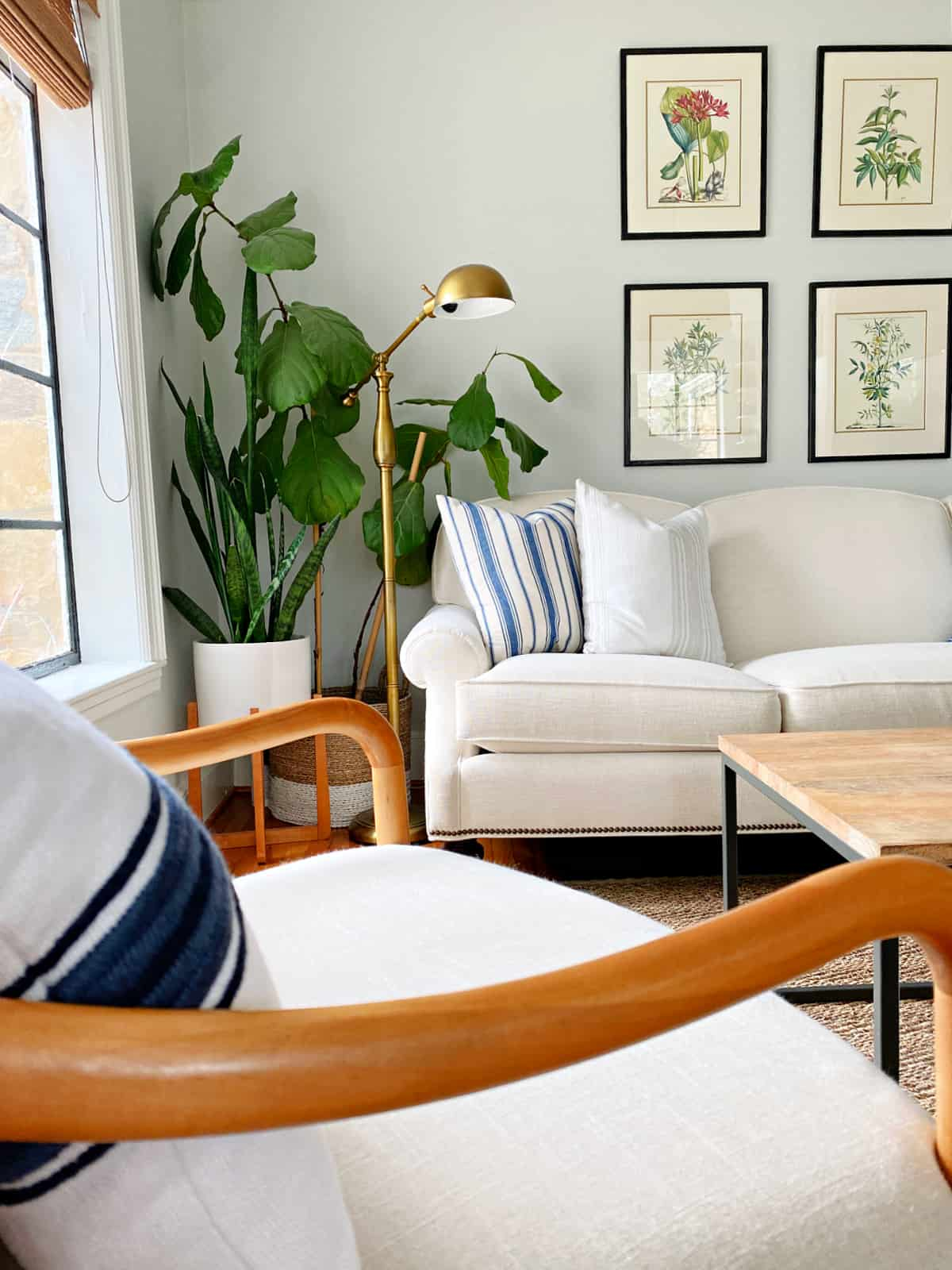 fiddle leaf fig and other plants in corner of living room
