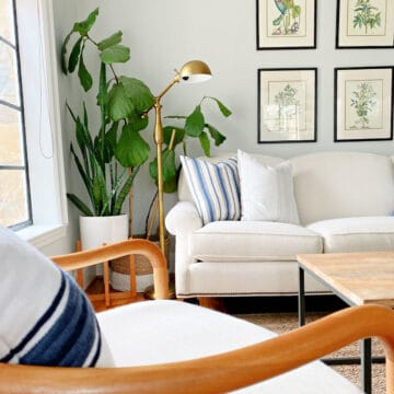 fiddle leaf fig and other plants in corner of living room