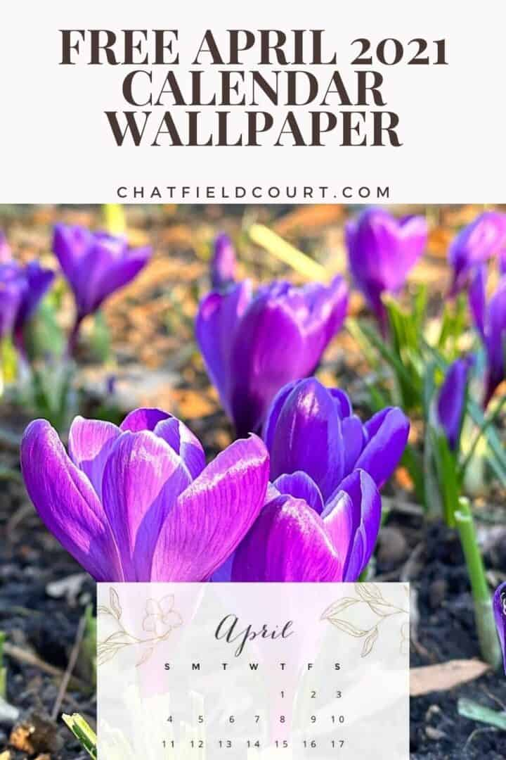 pinterest pin with April calendar over a picture of purple crocus