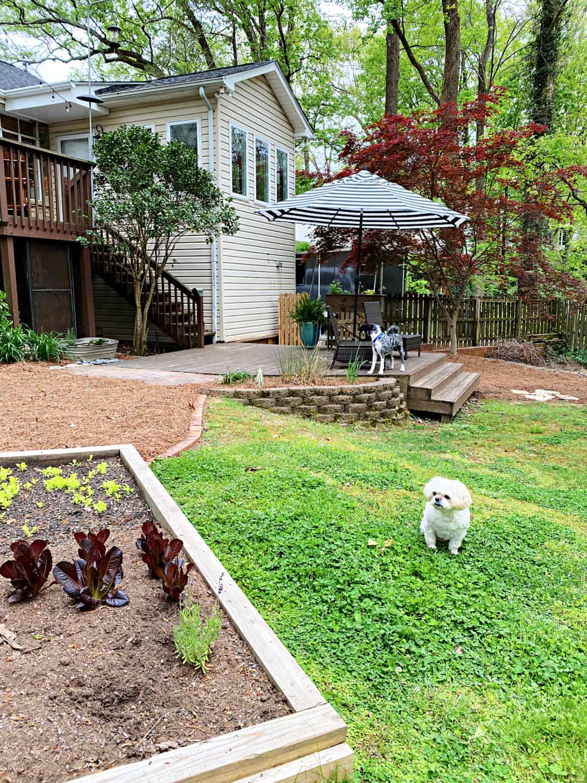 back yard with garden and brick edging