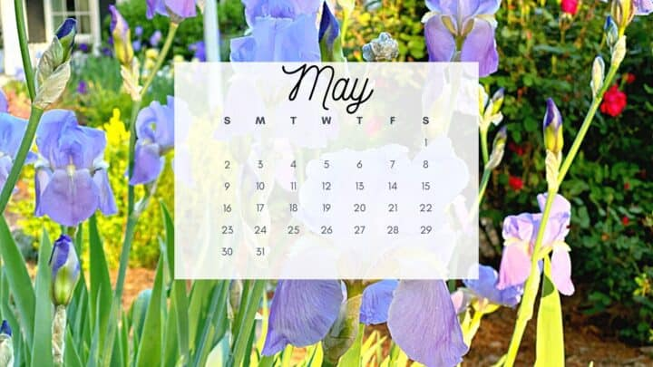 picture of irises with May calendar