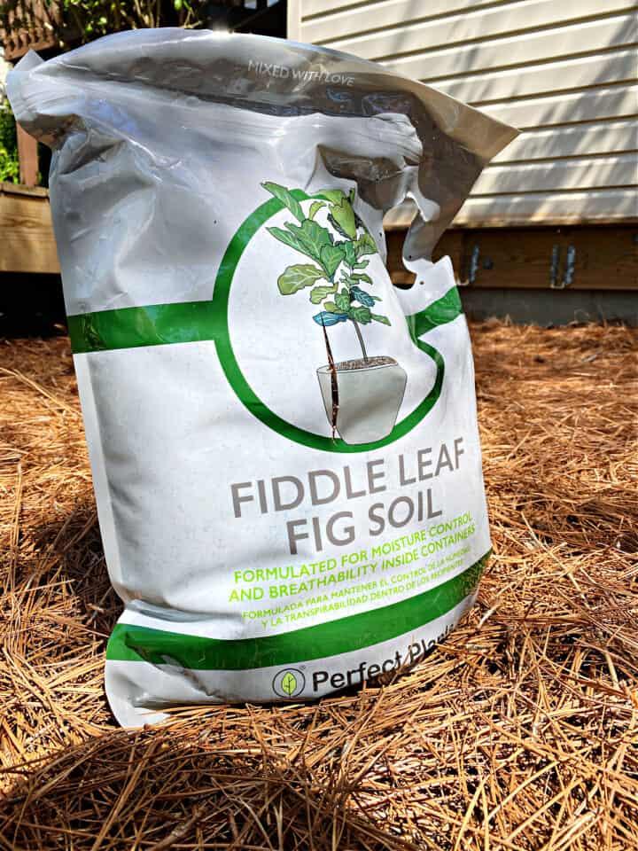 bag of potting soil for fiddle leaf fig plants