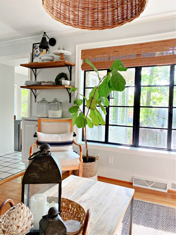 view out living room window with fiddle leaf fig in corner