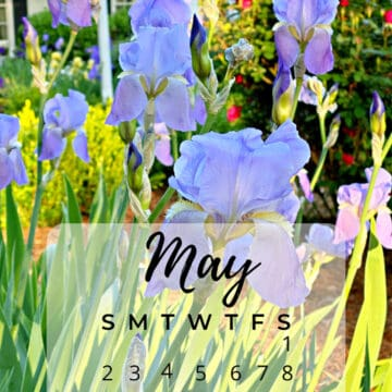 picture of irises with part of May calendar