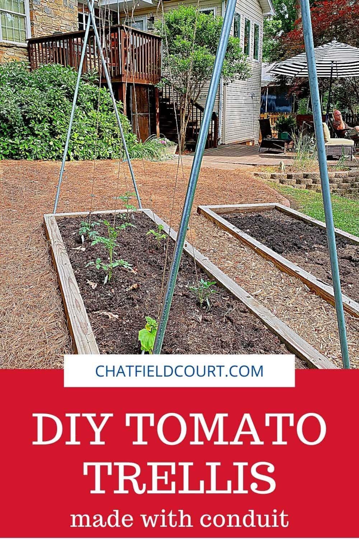 pinterest oin with DIY tomato trellis in backyard garden