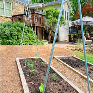 tomato trellis set up in a small raised bed garden