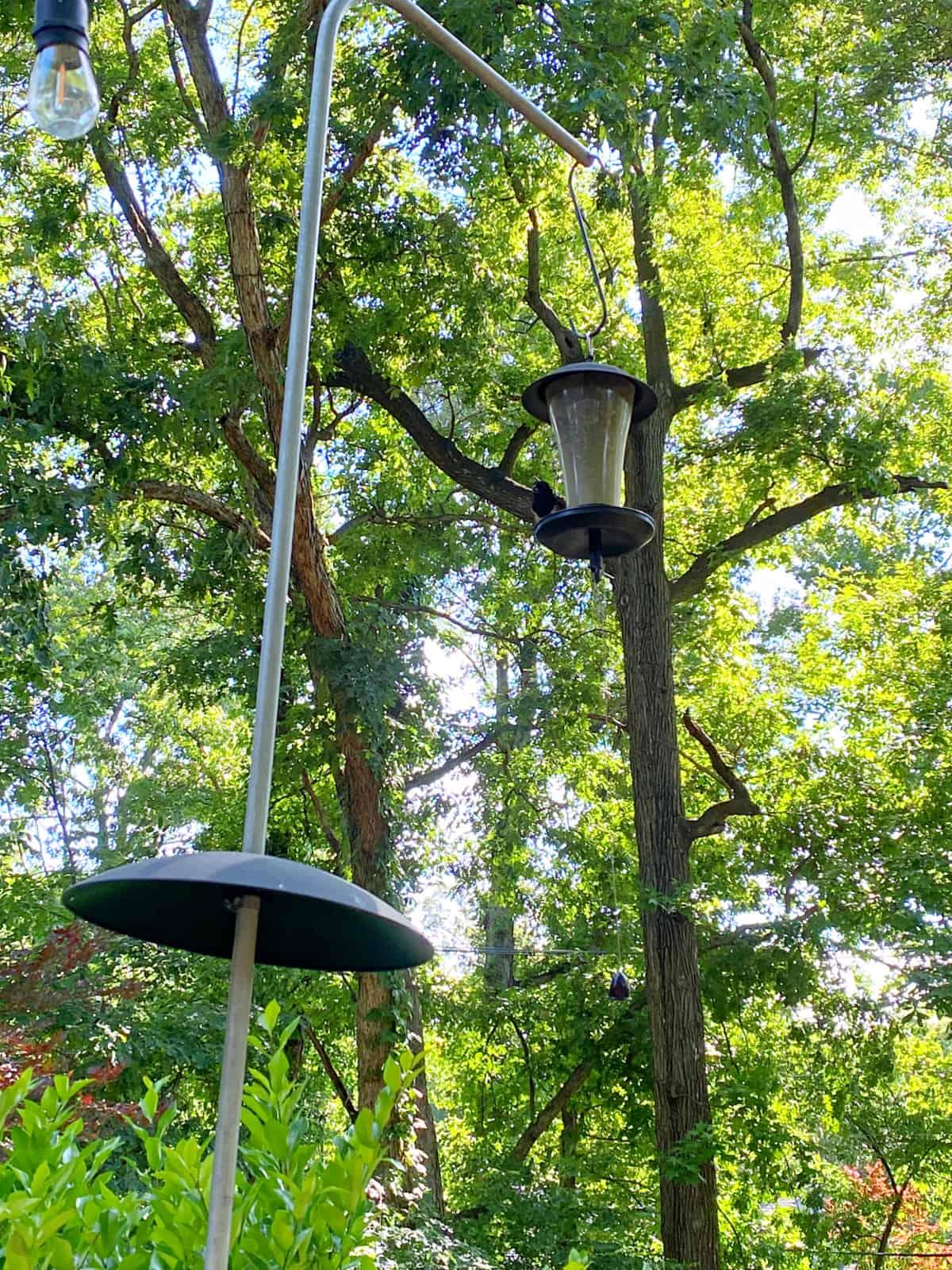 bird sitting on bird feeder