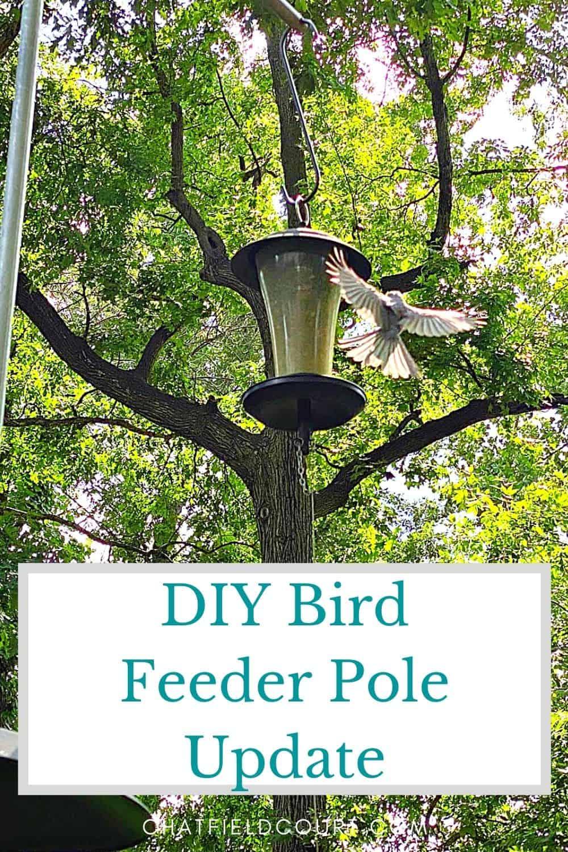 bird landing on bird feeder and large graphic