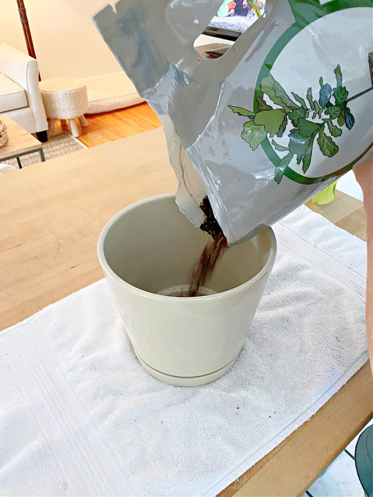 pouring potting soil in pot