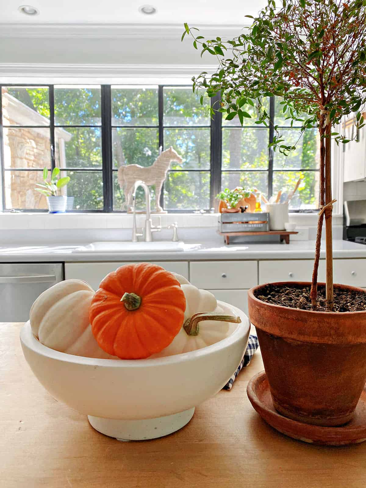 bowl of pumpkins and plant